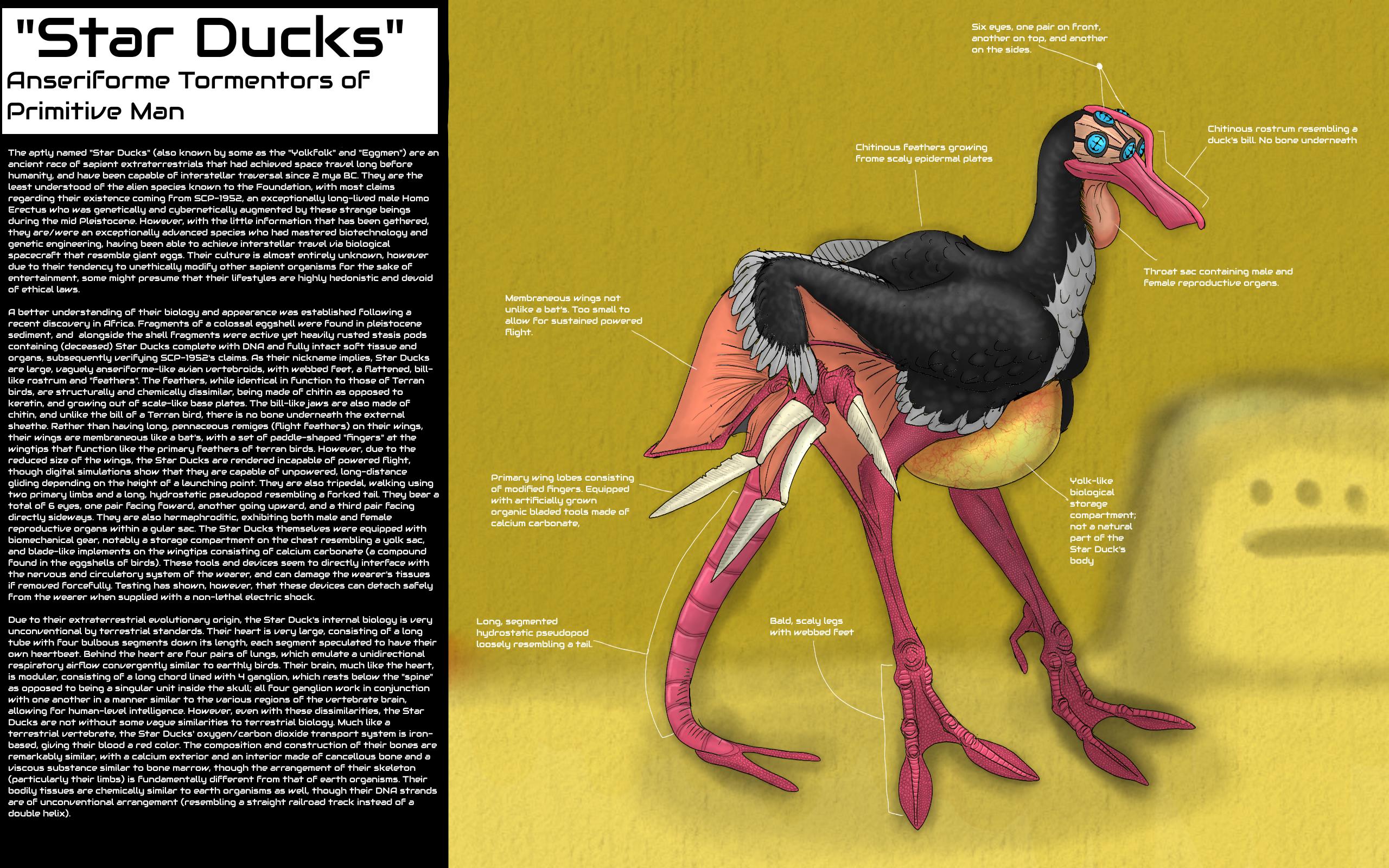 Star Ducks (SoI-1952/SCP-1952-B?)