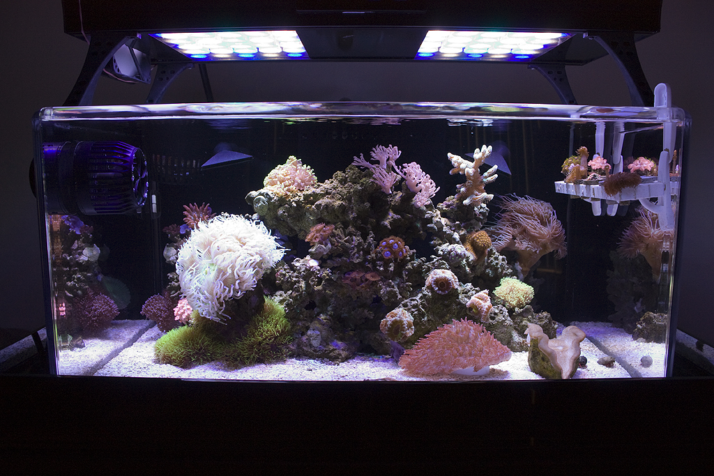 led lit tanks lighting forum nano forums. Black Bedroom Furniture Sets. Home Design Ideas