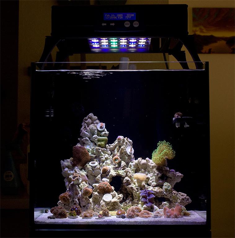 Eric's Elos Mini 20g Mixed Reef Tank (w/ Solaris LED Again