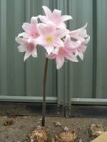 Flower Stock 7 by athlinia-stock