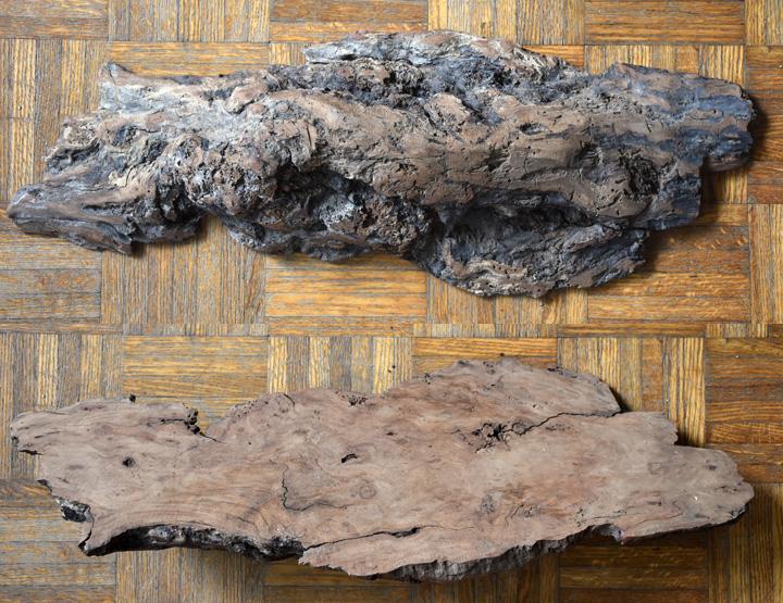 unidentified wood burl by nightserpent