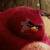 The Angry Birds Movie - Terence Icon