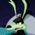 Loonatics Unleashed - Tech E. Coyote Icon by SuperMarioFan65