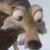 Ice Age - Scrat Icon