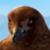 Happy Feet - Boss Skua Icon by SuperMarioFan65