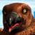 Happy Feet - Boss Skua Icon 2 by SuperMarioFan65