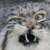 Funny Pallas Cat Icon
