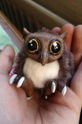 Tiny owl!