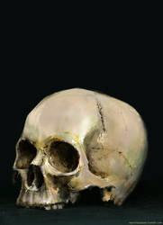skullstudy by MarioTeodosio