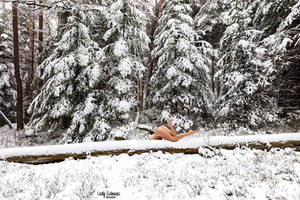 Slide into Snowy World