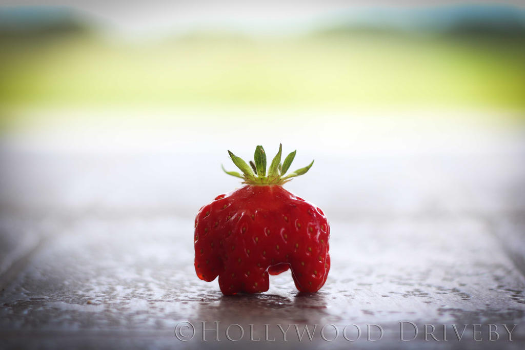 Little Strawberry Elephant by HollywoodDriveby