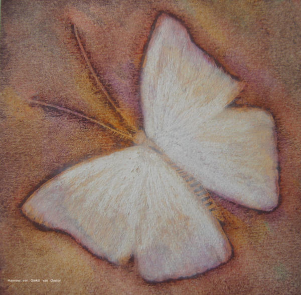 Butterfly of oil pastel by Harmina on deviantART