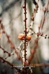 Rebirth of the leaves II