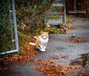 Orange Street Cat by confucius-zero
