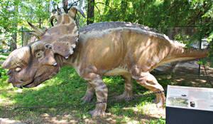 Pachyrhinosaurus lakustai by Lynus-the-Porcupine