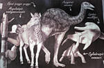 Explanations about the extinct animals