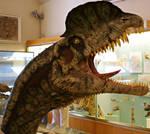 Dilophosaurus wetherilli - Reconstruction of head