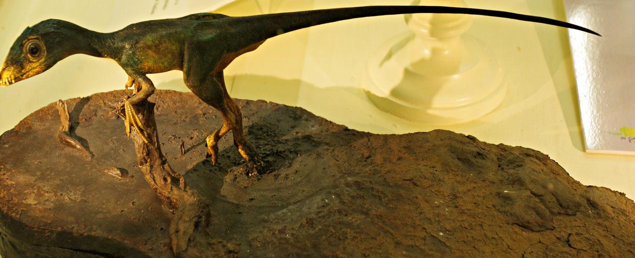 Scipionyx samniticus - 'Ciro'