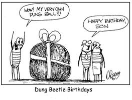 Dung Beetle Birthdays by WanyheadPress