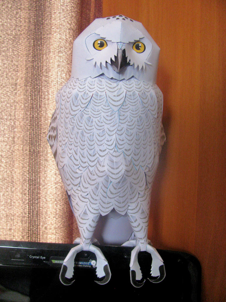 Male snowy owl hedwig papercraft by x0xchelseax0x on deviantart male snowy owl hedwig papercraft by x0xchelseax0x jeuxipadfo Choice Image