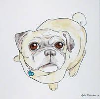 Pug by seneschal