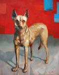 Good Dog Buddabba by seneschal