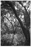 Forest by seneschal