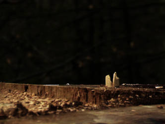 Cut tree by Recreate4Life
