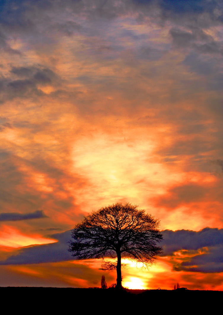 Sunset Tree by Capturing-the-Light