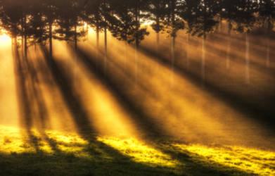 Sensitivity by Capturing-the-Light