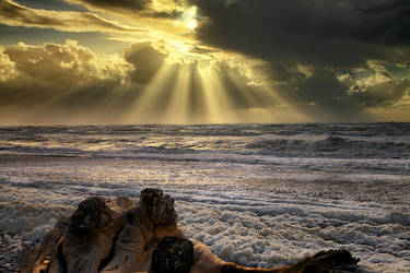 Driftwood by Capturing-the-Light