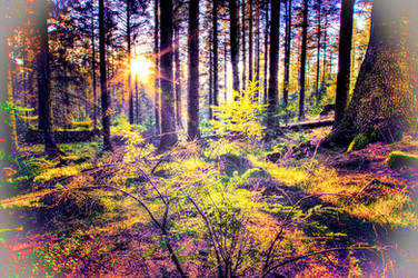 Forest of Dreams by Capturing-the-Light
