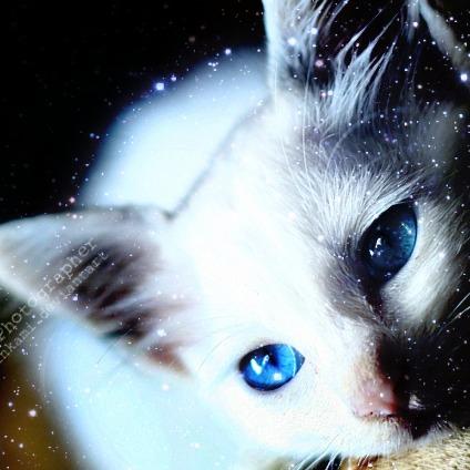 I'm a Snow Cat by kkpaw