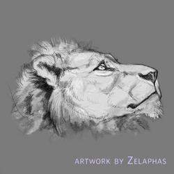 Lion studies 3