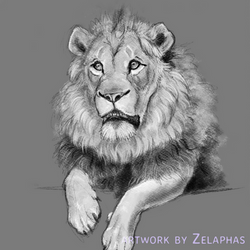 Lion studies 6