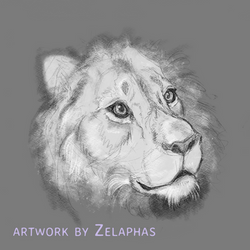 Lion studies 5