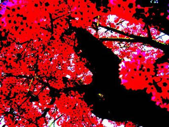 blossom tree. by sampire