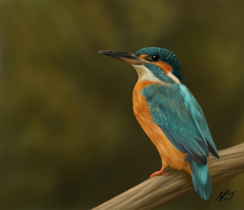 Kingfisher by quarridors