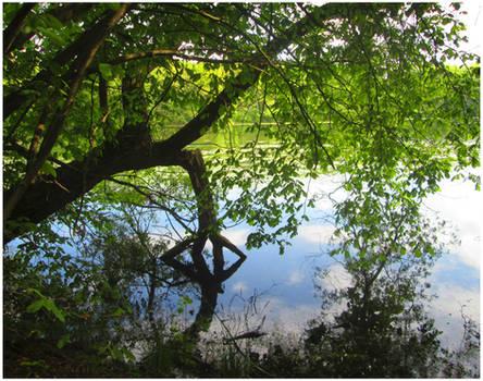 Stepped into pond