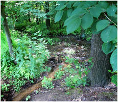 A forest brook