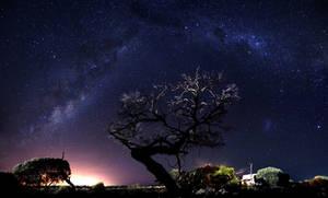 Rangeland by Star Light