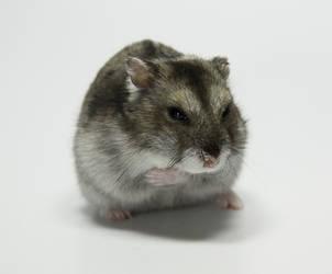Little Hamster 2 by DeceptMasterJJ