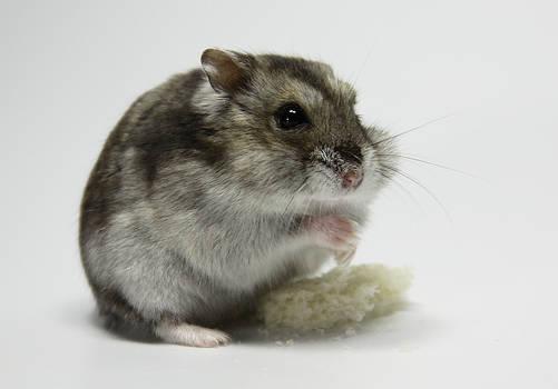 Little Hamster 3