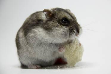 Little Hamster 5 by DeceptMasterJJ