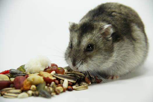 Little Hamster 9