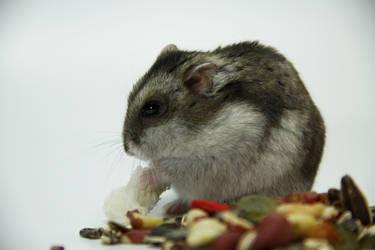 Little Hamster 8 by DeceptMasterJJ