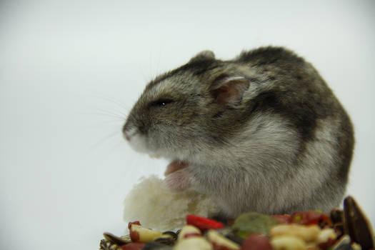 Little Hamster 7