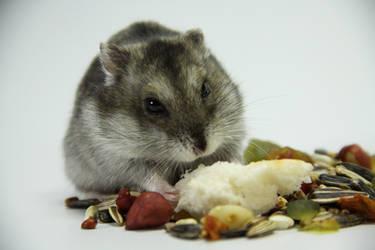 Little Hamster 6 by DeceptMasterJJ