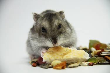 Little Hamster 10
