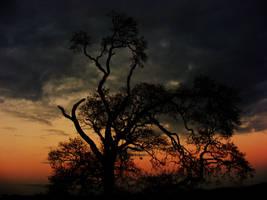Sunset. by StarDuskDreams